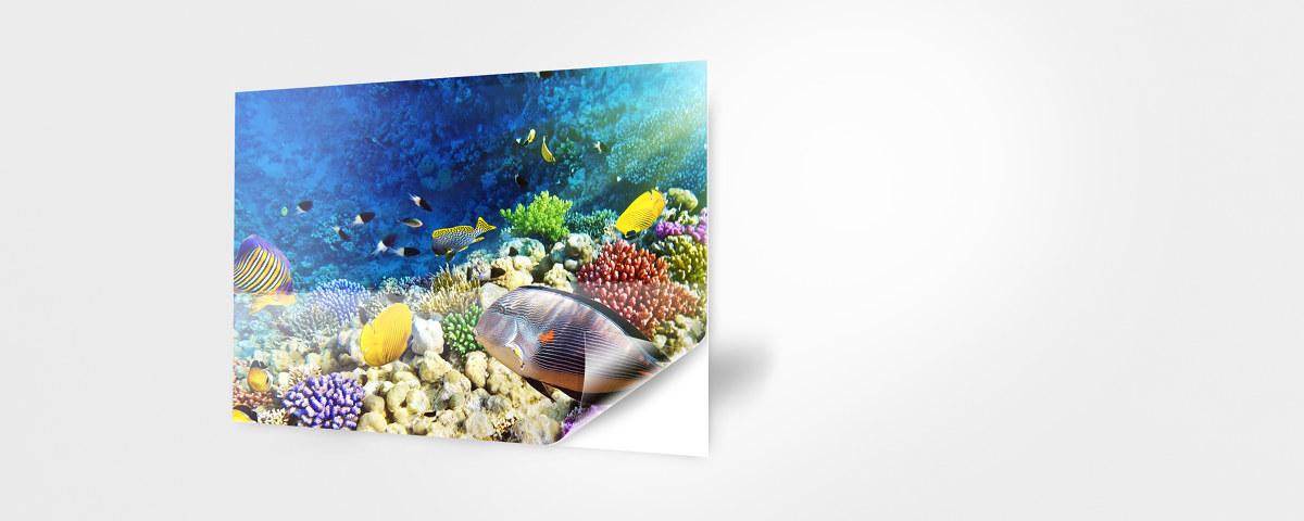 Aquarium r ckwandfolie mit ihrem motiv bei myposter for Durchsichtige klebefolie