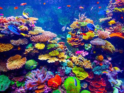 Aquarium r ckwandfolie mit ihrem motiv bei myposter - Aquarium hintergrund ausdrucken ...