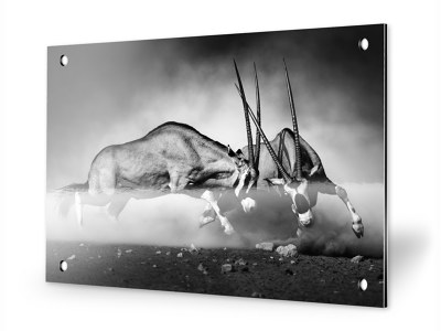foto op aluminium geborsteld of wit aluminium. Black Bedroom Furniture Sets. Home Design Ideas