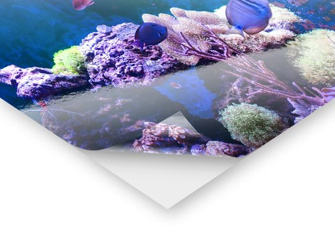 aquarium r ckwandfolie mit ihrem motiv bei myposter. Black Bedroom Furniture Sets. Home Design Ideas