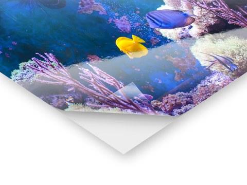 Aquarium r ckwandfolie mit ihrem motiv bei myposter for Bedruckte klebefolie
