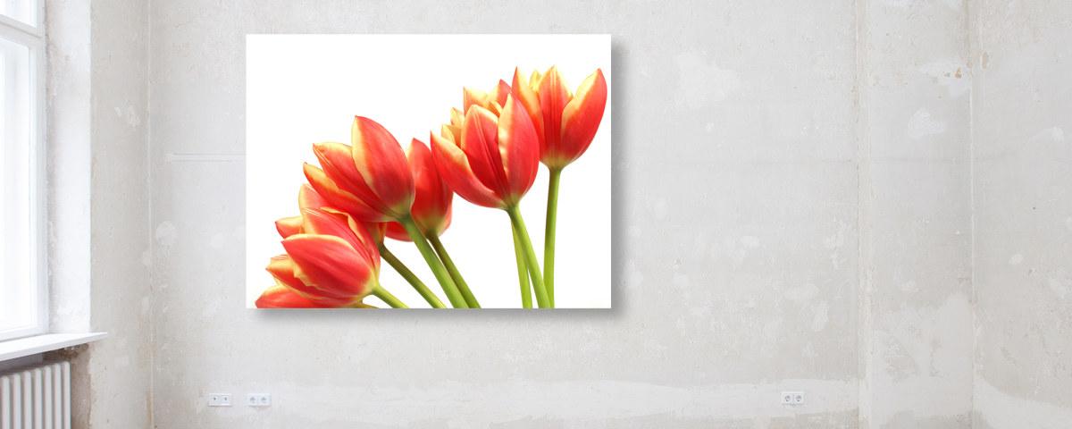 Un Mazzo Di Fiori Composto Da 5 Rose 7 Tulipani.L Immagine Fiore Creativo Con I Tulipani Entusiasta