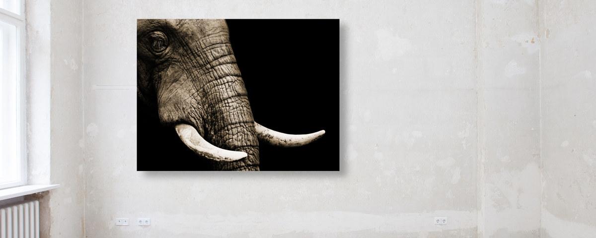 Der treue Blick - bezauberndes Elefanten-Bild