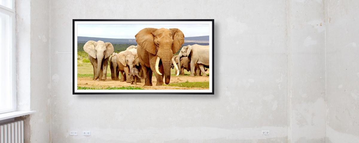 Wie aus der natur elefanten bilder in poster gr??e