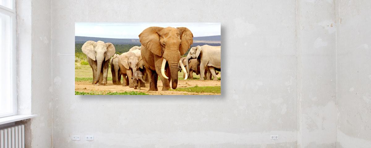 Wie aus der Natur: Elefanten Bilder in Poster-Größe