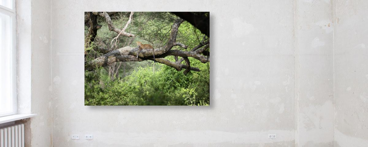 Leopard auf Ast Tiere Wandbild auf Leinwand in verschiedenen Größen