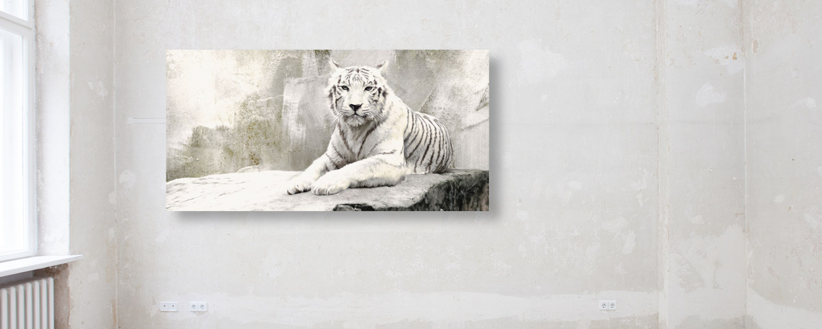 Edel in Schwarz und Weiß: Tiger Bilder mit Stil | myposter