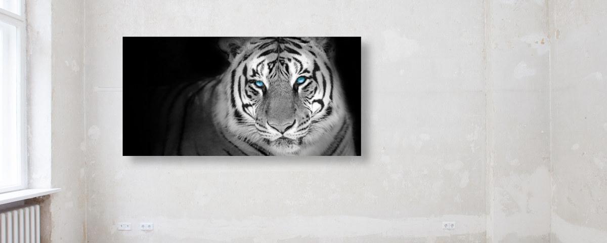 Tiger Panorama für eine sinnlich wilde Wandgestaltung