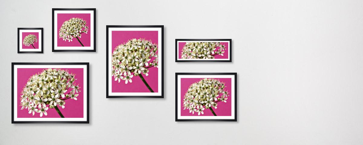 Blumenbilder in lila überraschen mit Stil und Geschmack