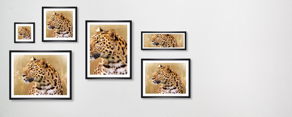 leopard bilder f r ein eindrucksvolles ambiente. Black Bedroom Furniture Sets. Home Design Ideas