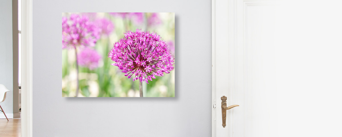 Kreatives und pinkes Blumenbild vom Riesen Lauch