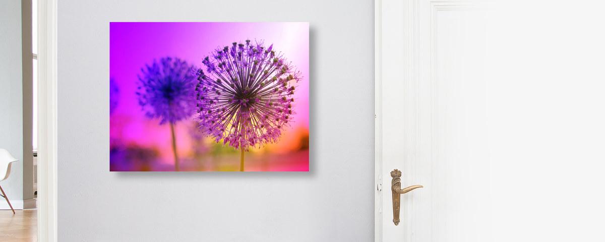 die sch nheit der pusteblume in einem kreativen bild. Black Bedroom Furniture Sets. Home Design Ideas