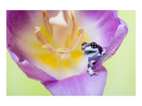 Frosch in Blume