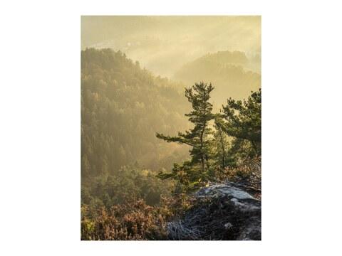Basteiaussicht im Nebel II Elbsandsteingebirge