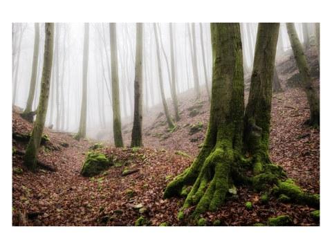 Nebel des Lichtenfels