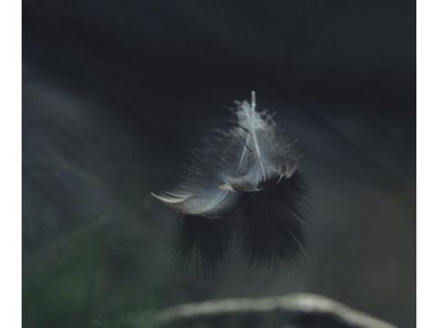 Vogelfedern