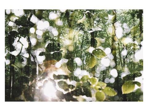 Leuchtendes Laub im Wald