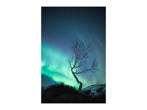 The Aurora Tree