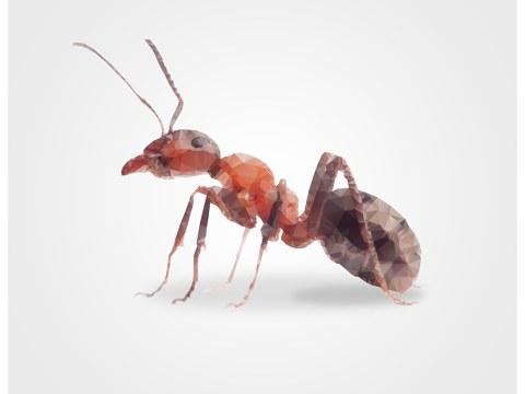 Image de fourmi