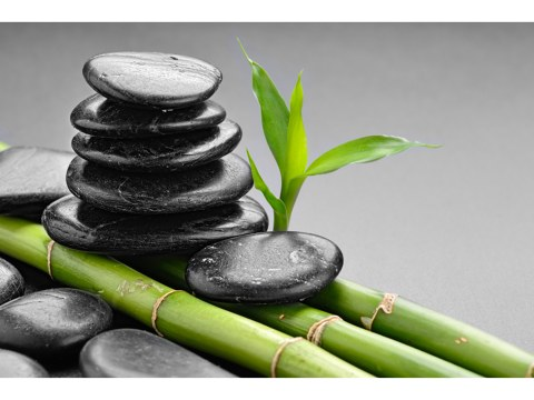 Bambus Design