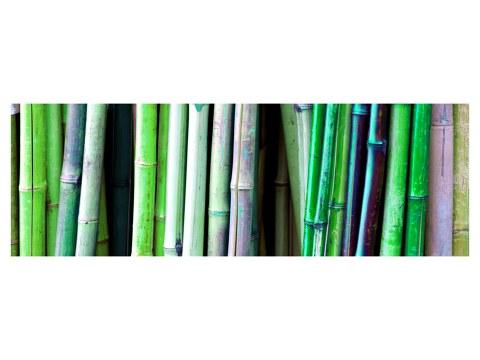 Affiche de bambous