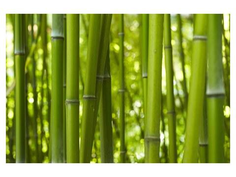 Images de bambous