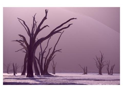 Photo d'arbres