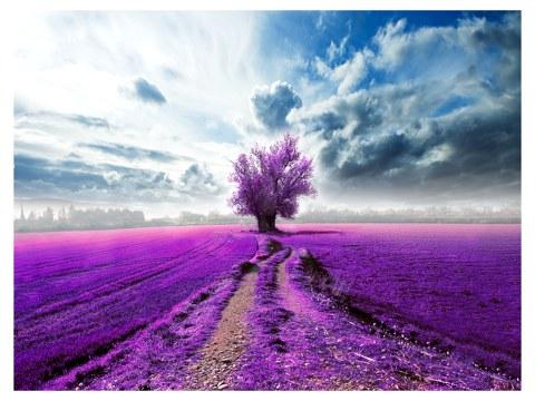 Bild Baum