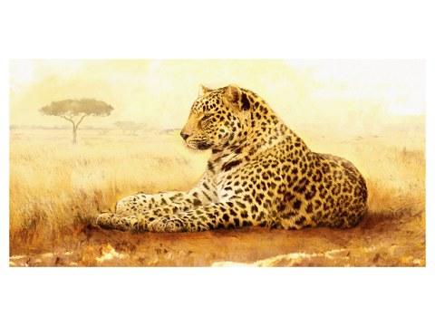 Image de léopard