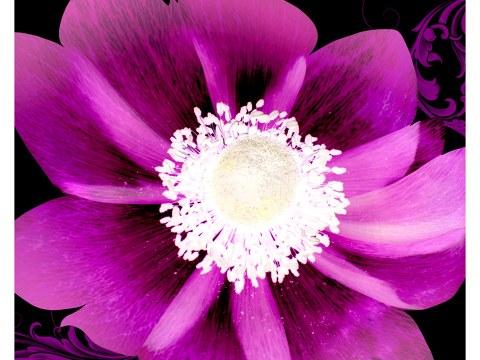 Photo avec fleur
