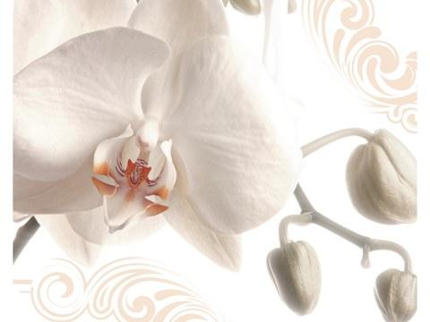 Image d'orchidée