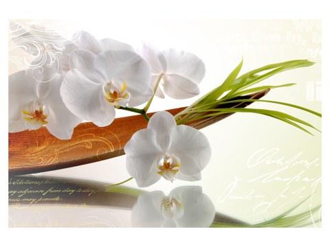 Bild Orchideen