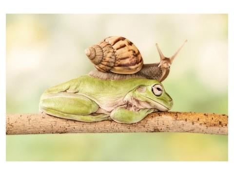 Escargot sur grenouille