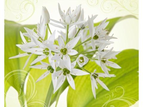 Harmonie de fleurs blanches