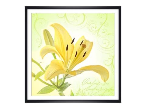 zauberhafte bilder von lilien auf leinwand. Black Bedroom Furniture Sets. Home Design Ideas