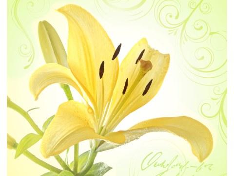 Bilder Lilien