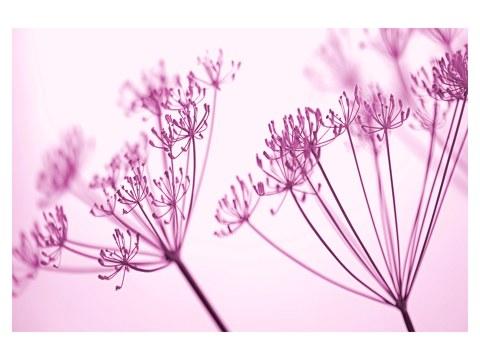 Image florale