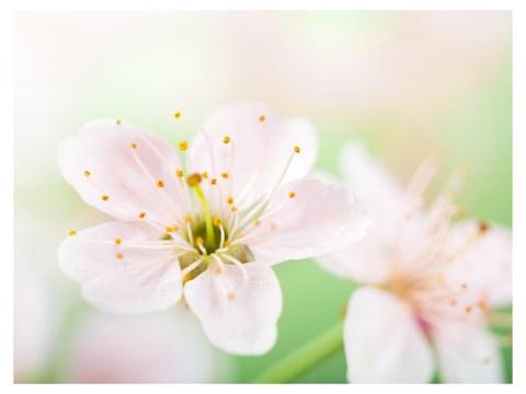 photos-florales