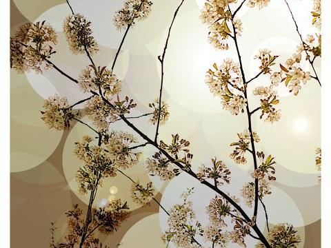 Photos florales