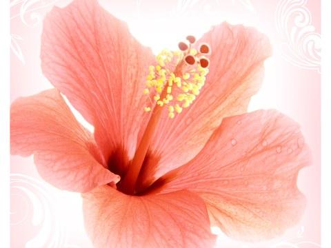Affiche de fleurs