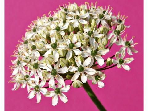 Blumenbilder Lila