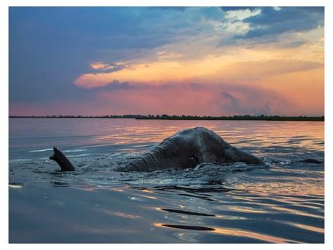 Photo d'éléphant dans l'eau
