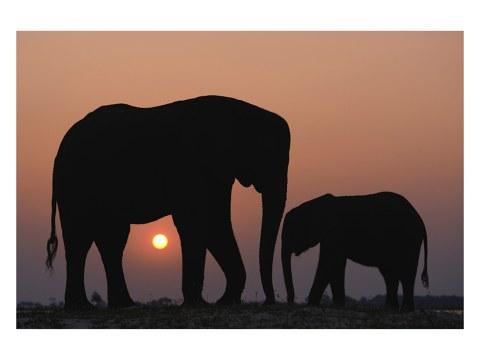 Los animales en la puesta del sol
