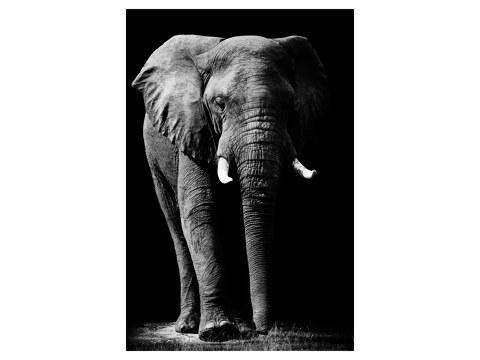 Image d'éléphants