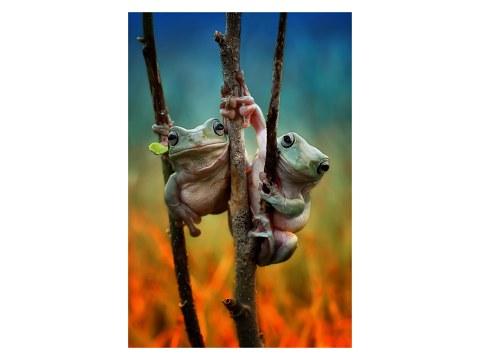 Photo de grenouilles