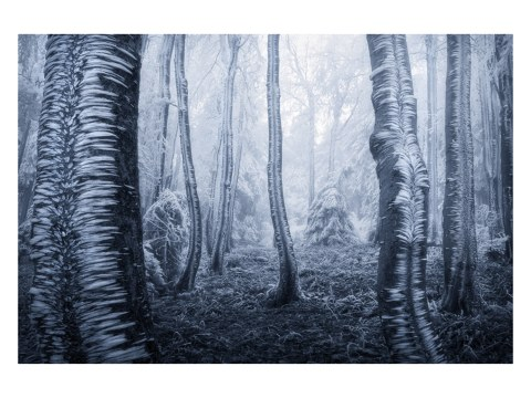 Photo d'arbres gelés