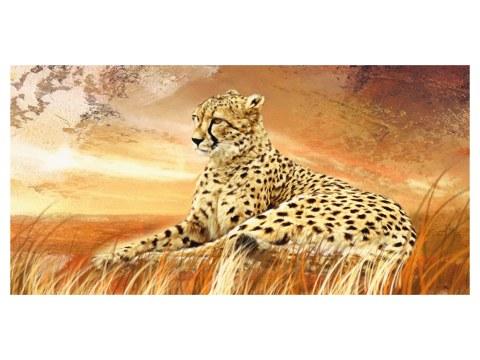 immagini Cheetah