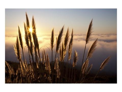Grassprieten in de zon