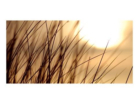 Gras Foto