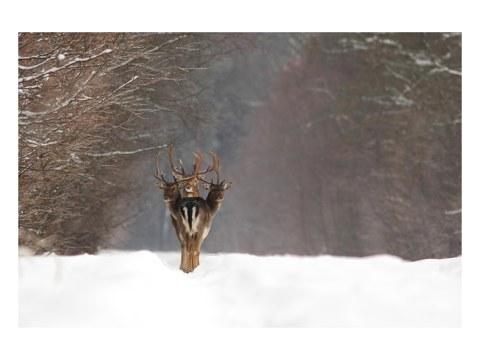 ciervos motivo